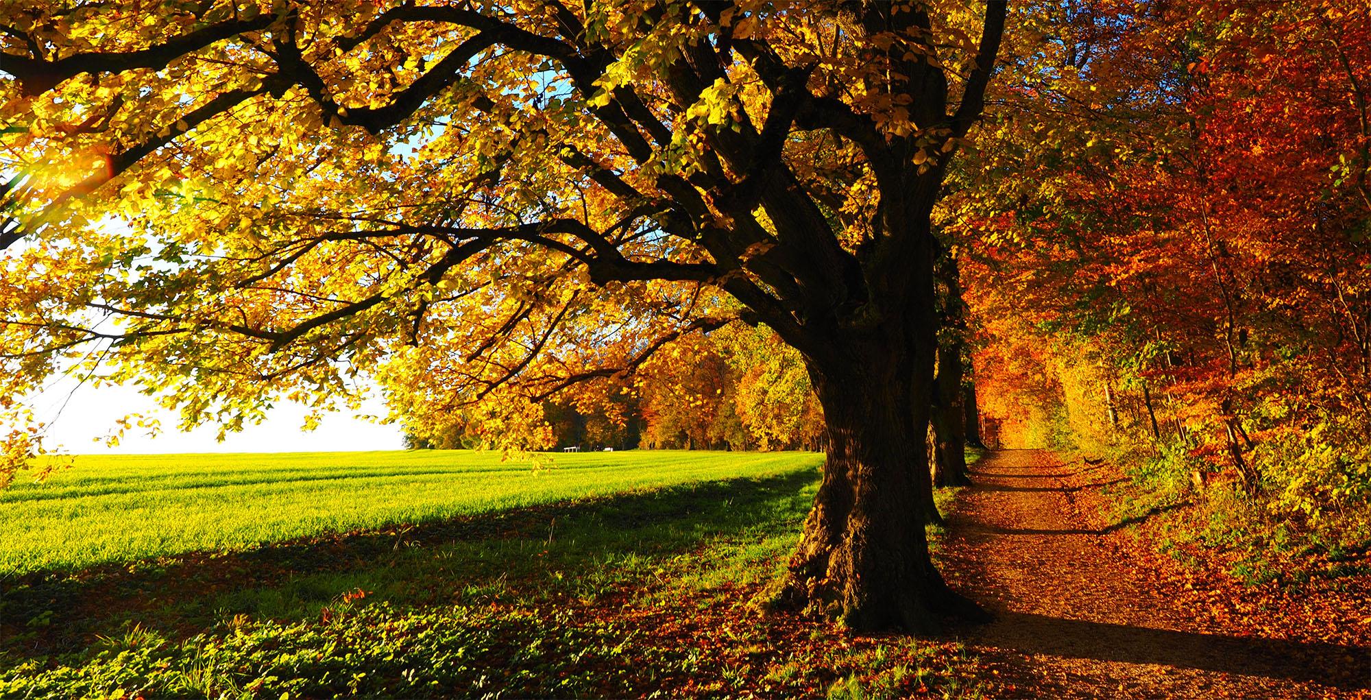 Baumpflege im Herbst