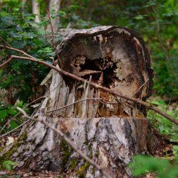 tree-2386169_1920